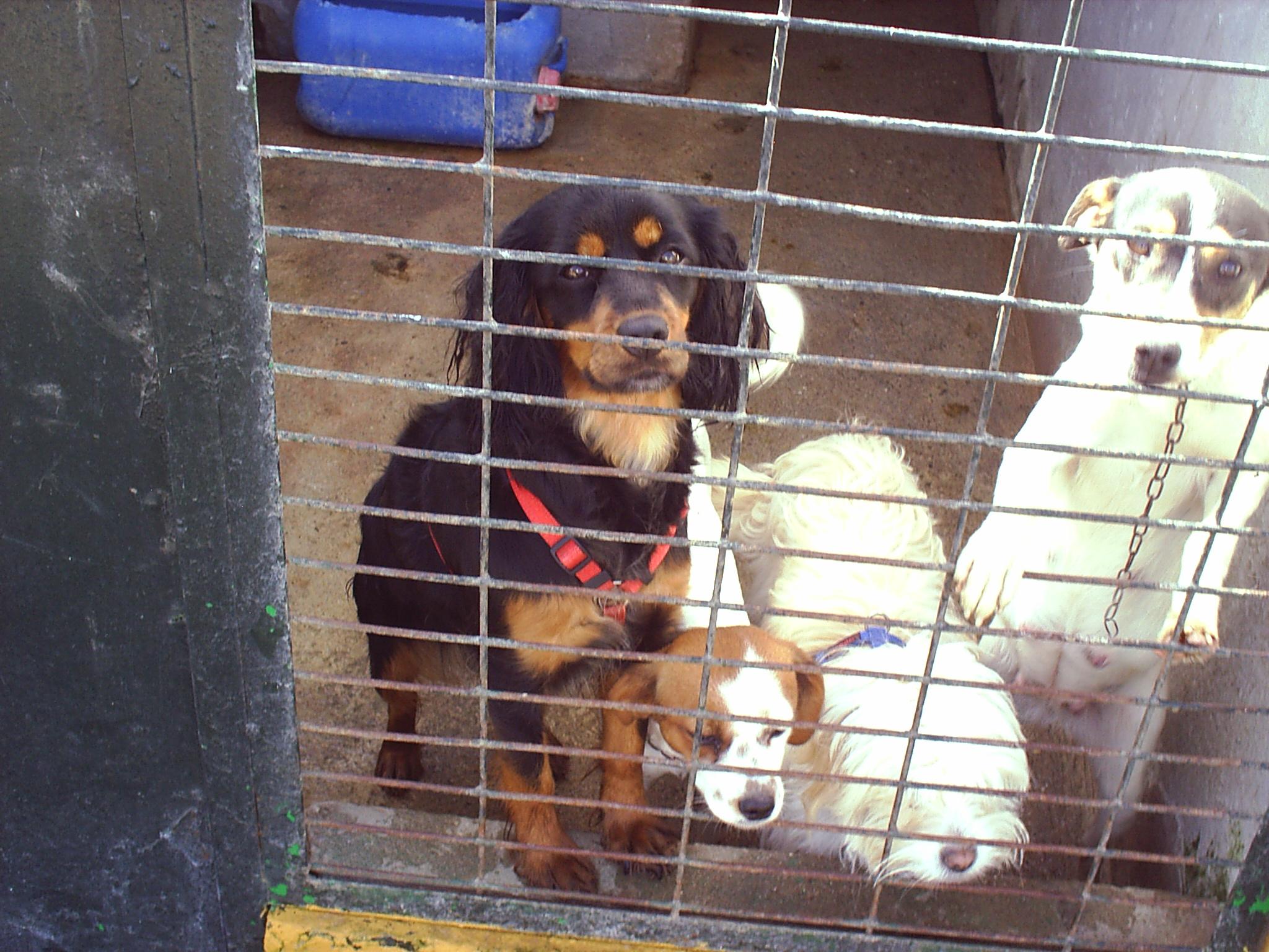Los perros sufren y mueren en las perreras - Perrera de vilafranca ...